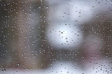 雨の日には注意したい!愛犬との散歩と気を付けたいポイント
