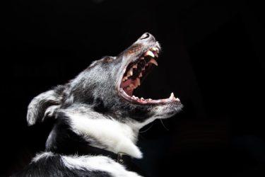 犬の歯磨き方法とは?【上手な磨き方・ケアがわかる】