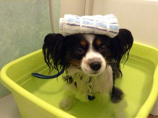 誰でも出来る!犬の上手な洗い方とお勧めシャンプー