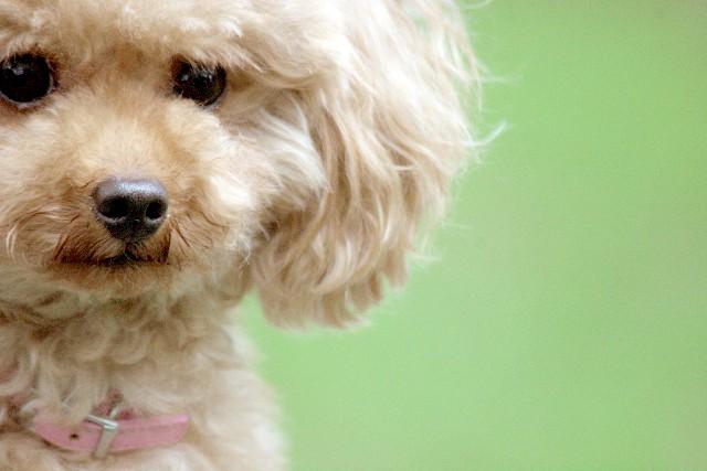 犬の抜け毛の原因とその対策【毛の種類は4種類】