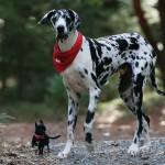 dog1station-bigandsmall
