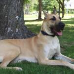 dog1station-bigbog