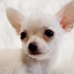 dog1station-smalldog