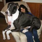 dog1station_great_dane