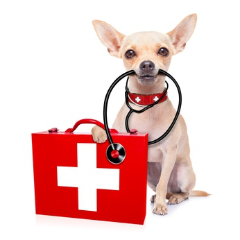 dog1station-medical-doctor-dog