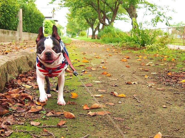 犬の散歩マナー【あたなたは大丈夫?】