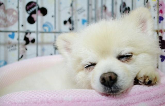 犬の下痢の原因について【大腸性・小腸性があります】
