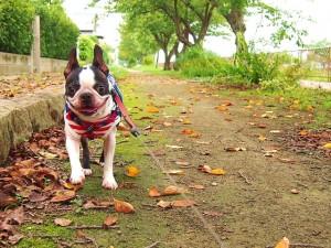 dog1station-散歩