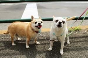 dog1station-散歩2