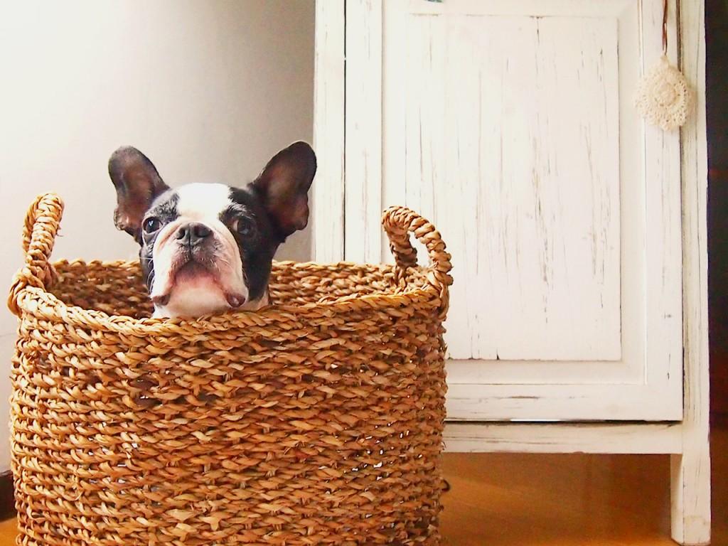 dog1station-海外から帰国2