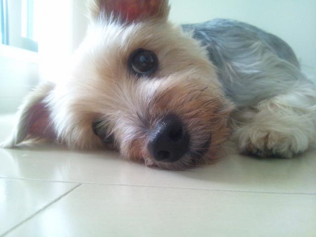 dog1station_保険2