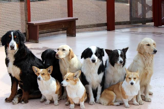 一目でわかる!犬の犬種とグループ分け【特徴や性格も納得】