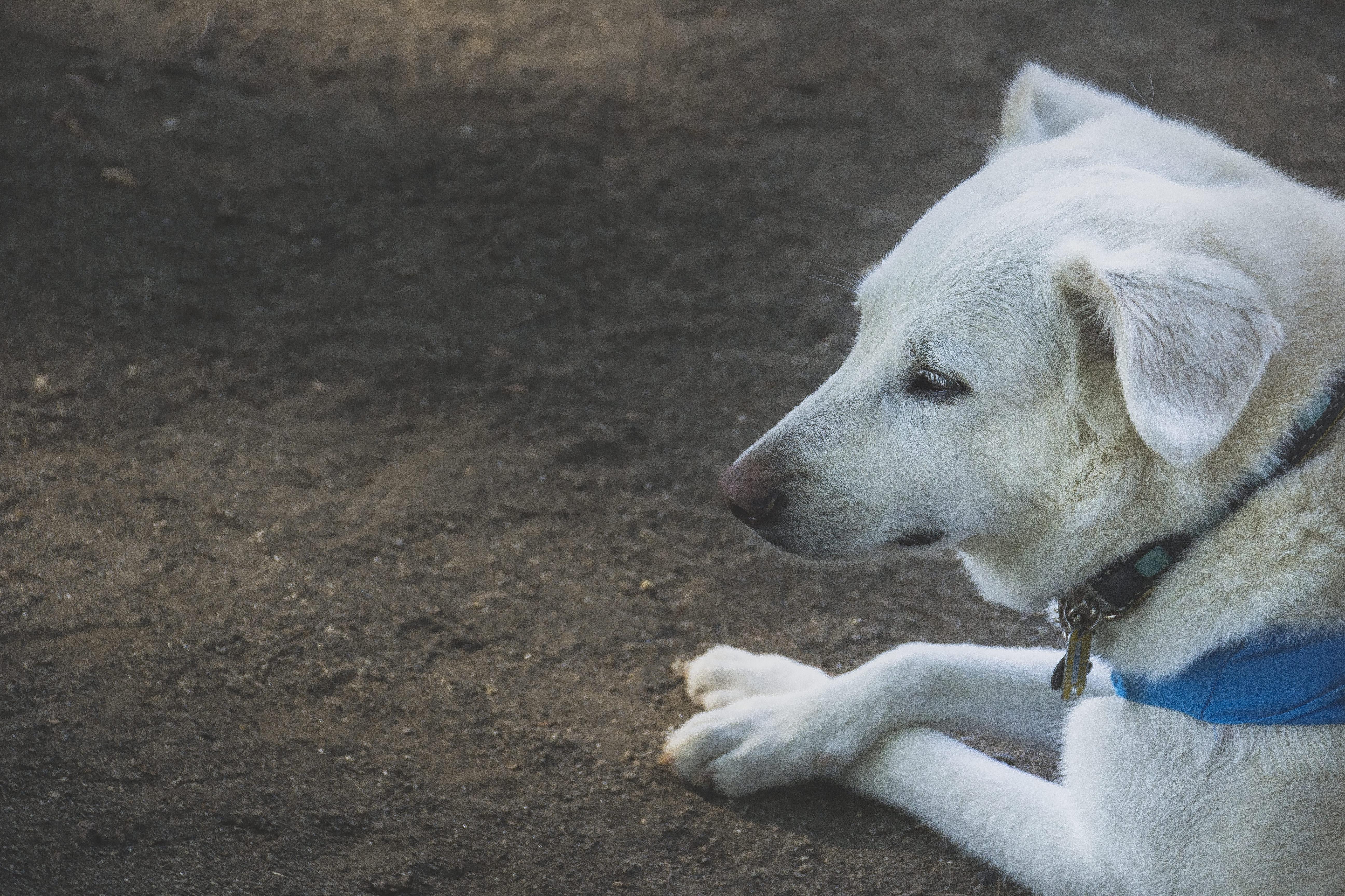免疫介在性関節炎とは?具体的な治療法をご紹介【犬の病】