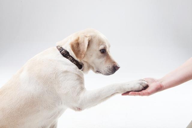 【犬の病】アジソン病とは?具体的な症状と治療法をご紹介
