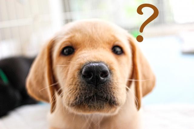 悪化すると手術の必要あり!?犬の肛門周囲腺炎とは?